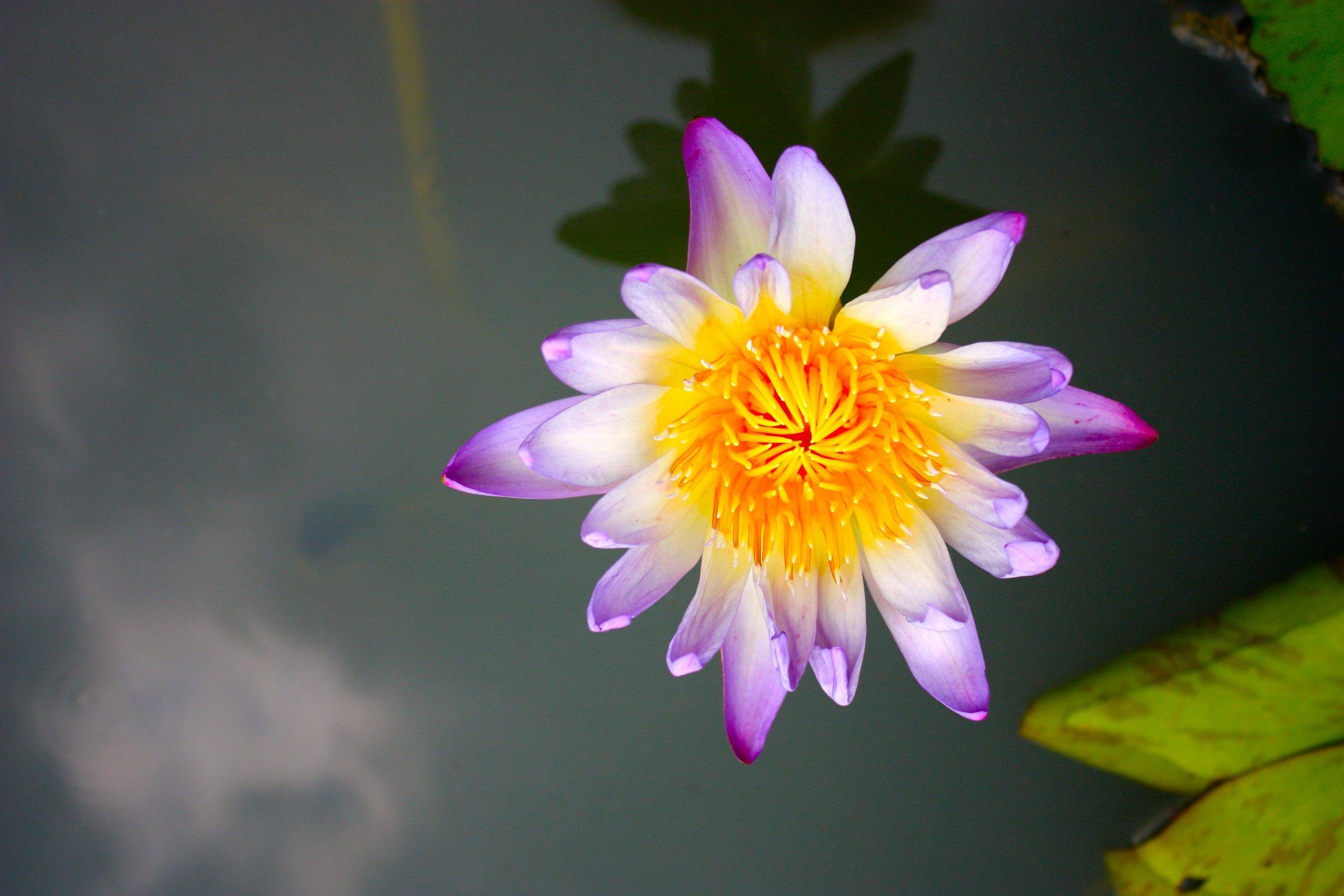 lotusbkk.jpg