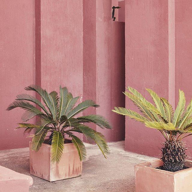 Pink architecture and green palm mood inspiration . . . . . . . . #pinkarchitecture  #palmtreelover  #summermood  #hotanddrysummer