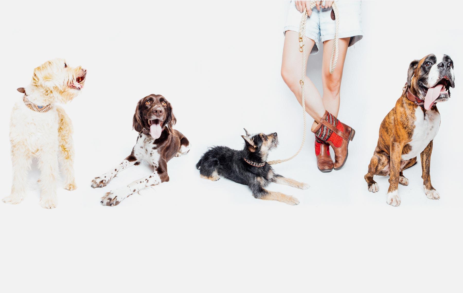Ogrlice za pse izrađene u Marakešu / Maroko