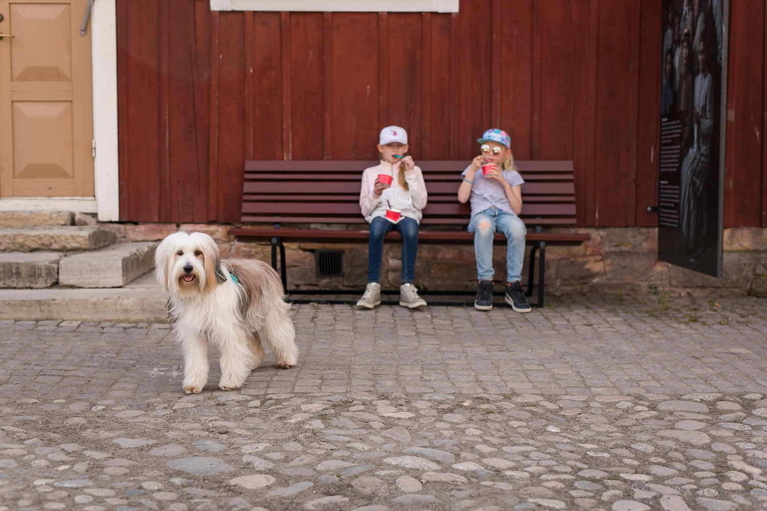 photo-of-dog-with-children-eating-ice-cream.jpg