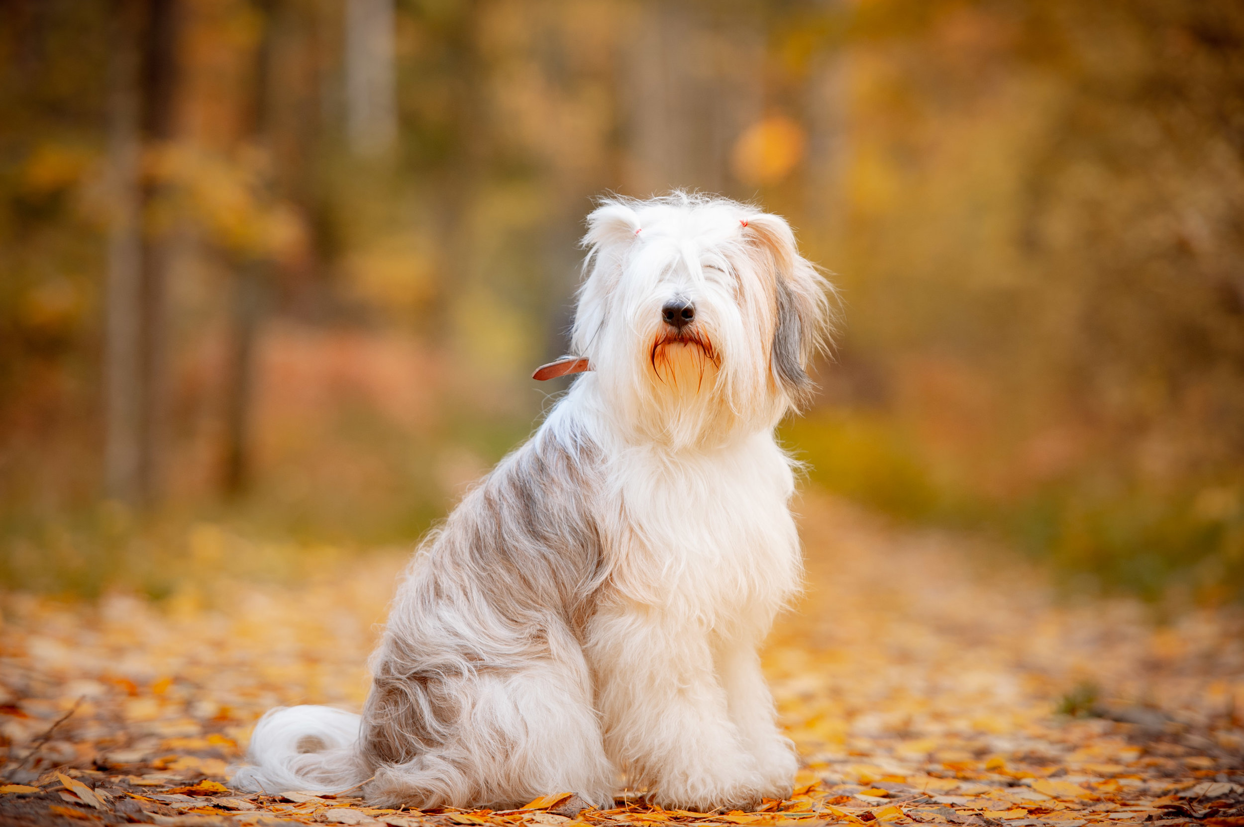 - And the award for most handsome dog goes to…