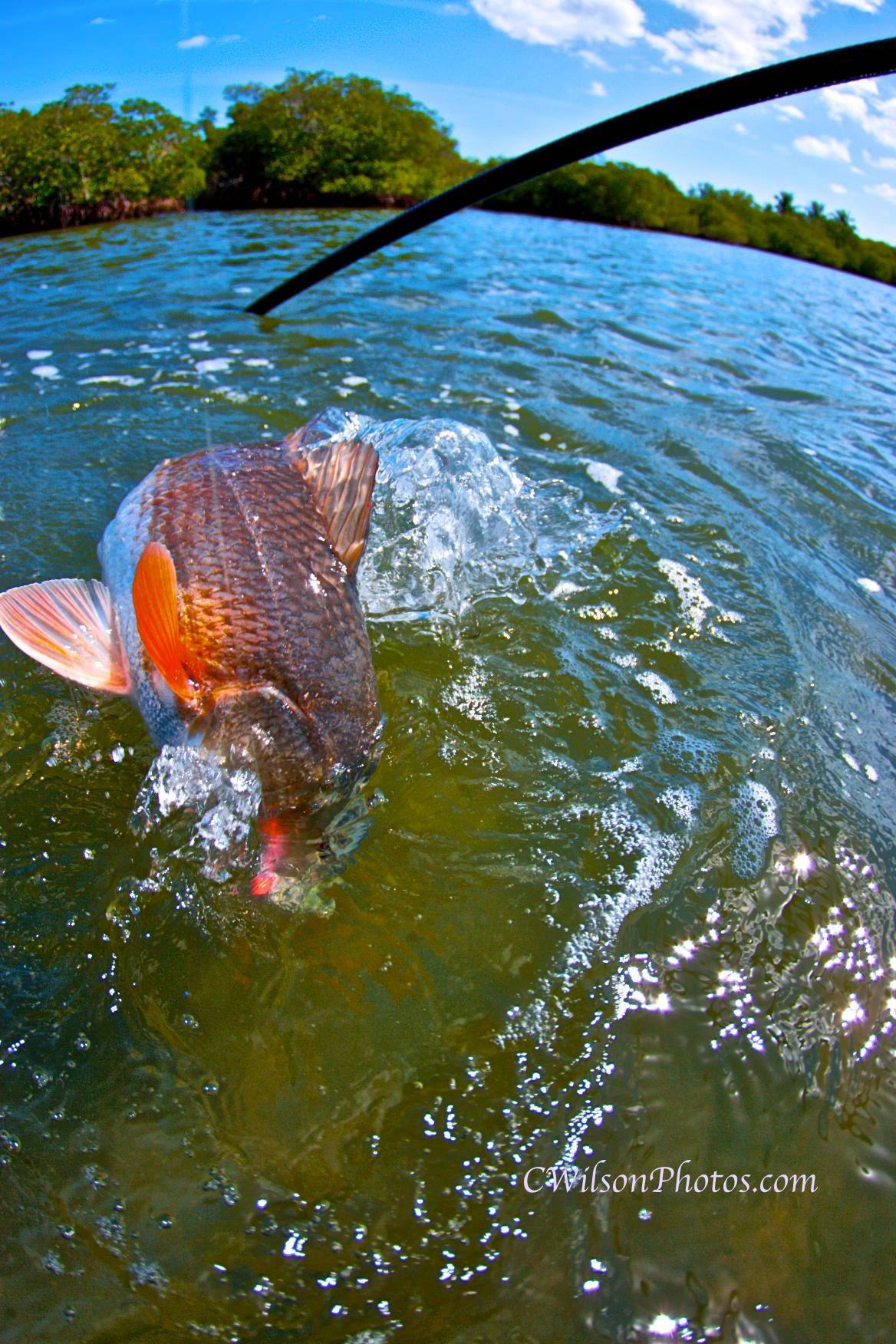 everglades-redfish-7.jpg