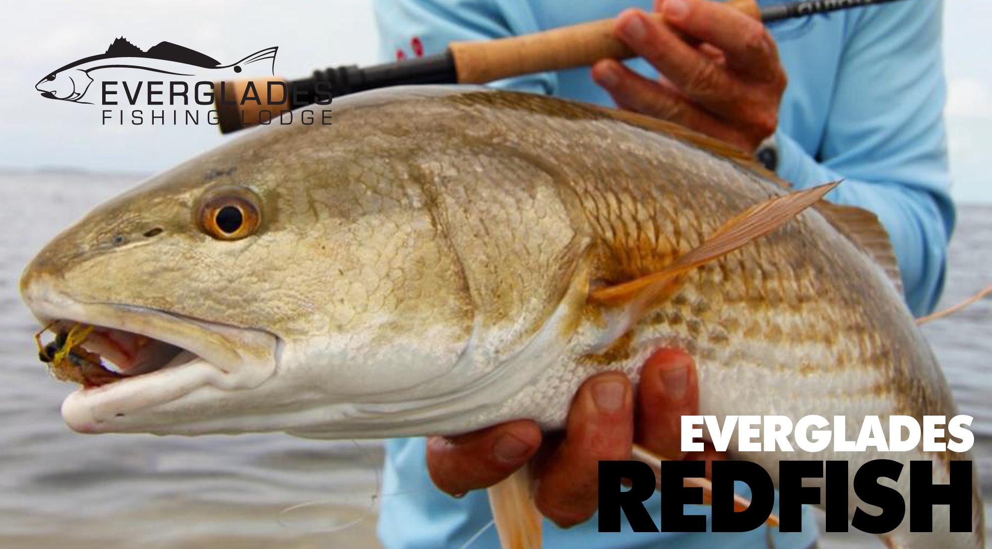 everglades-redfish-fishing.jpg