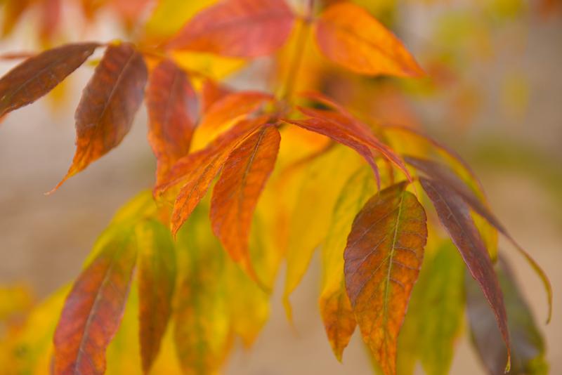 leavesm_3742.jpg
