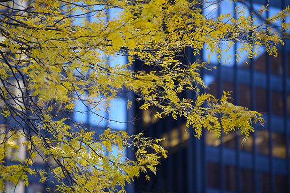 fall tree_sm.jpg