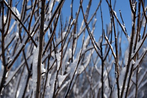branches_8029.jpg