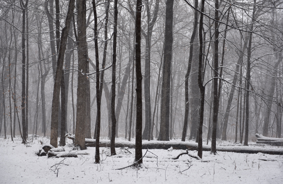 woods_sm.jpg