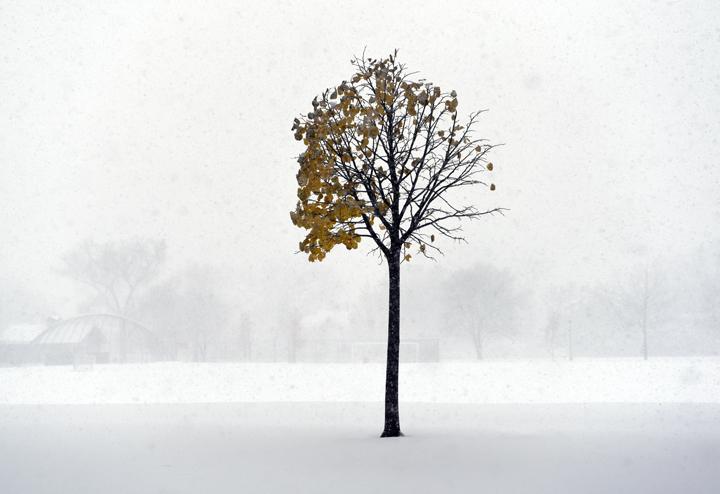 snow tree_sm.jpg