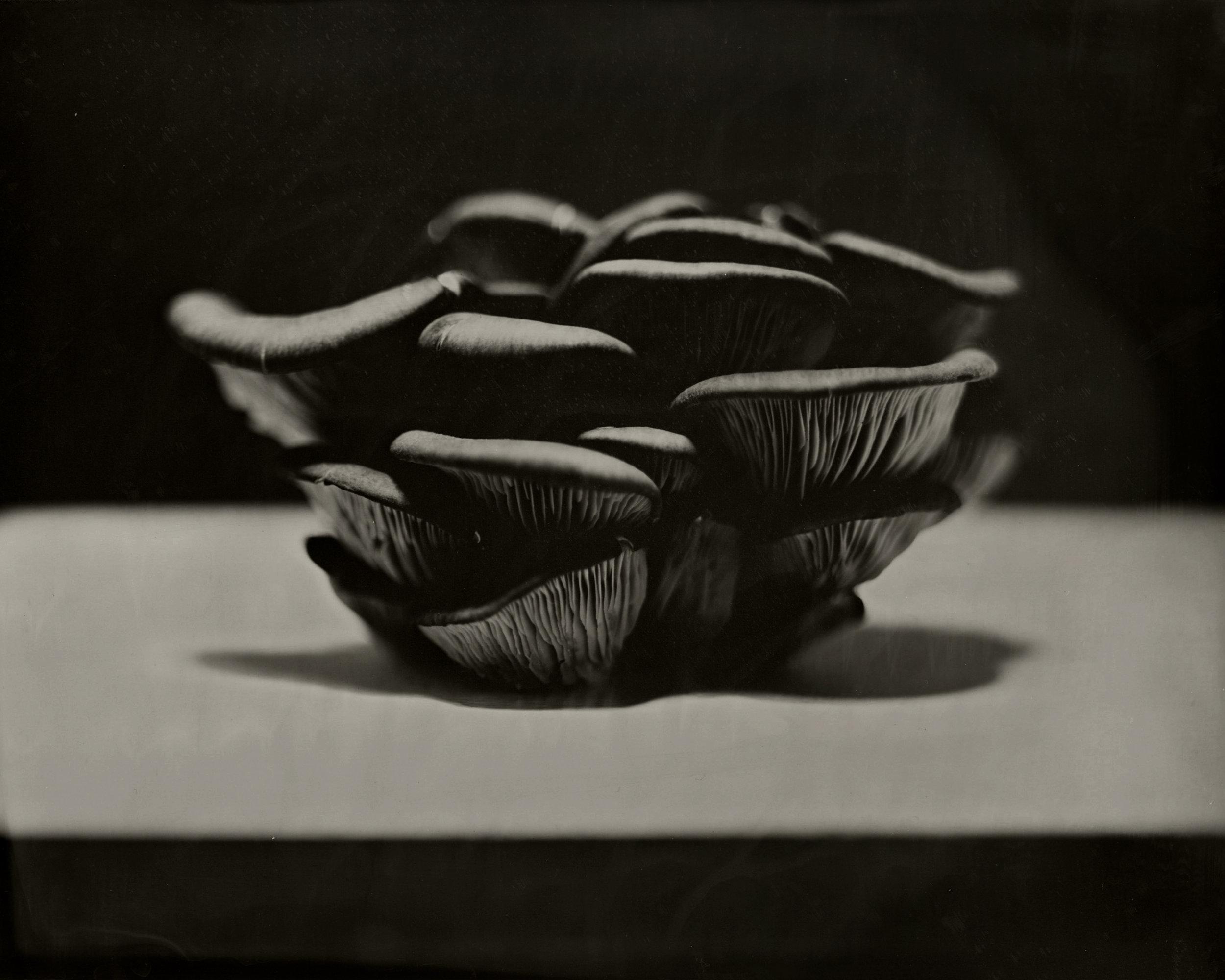 mushroom2.jpg