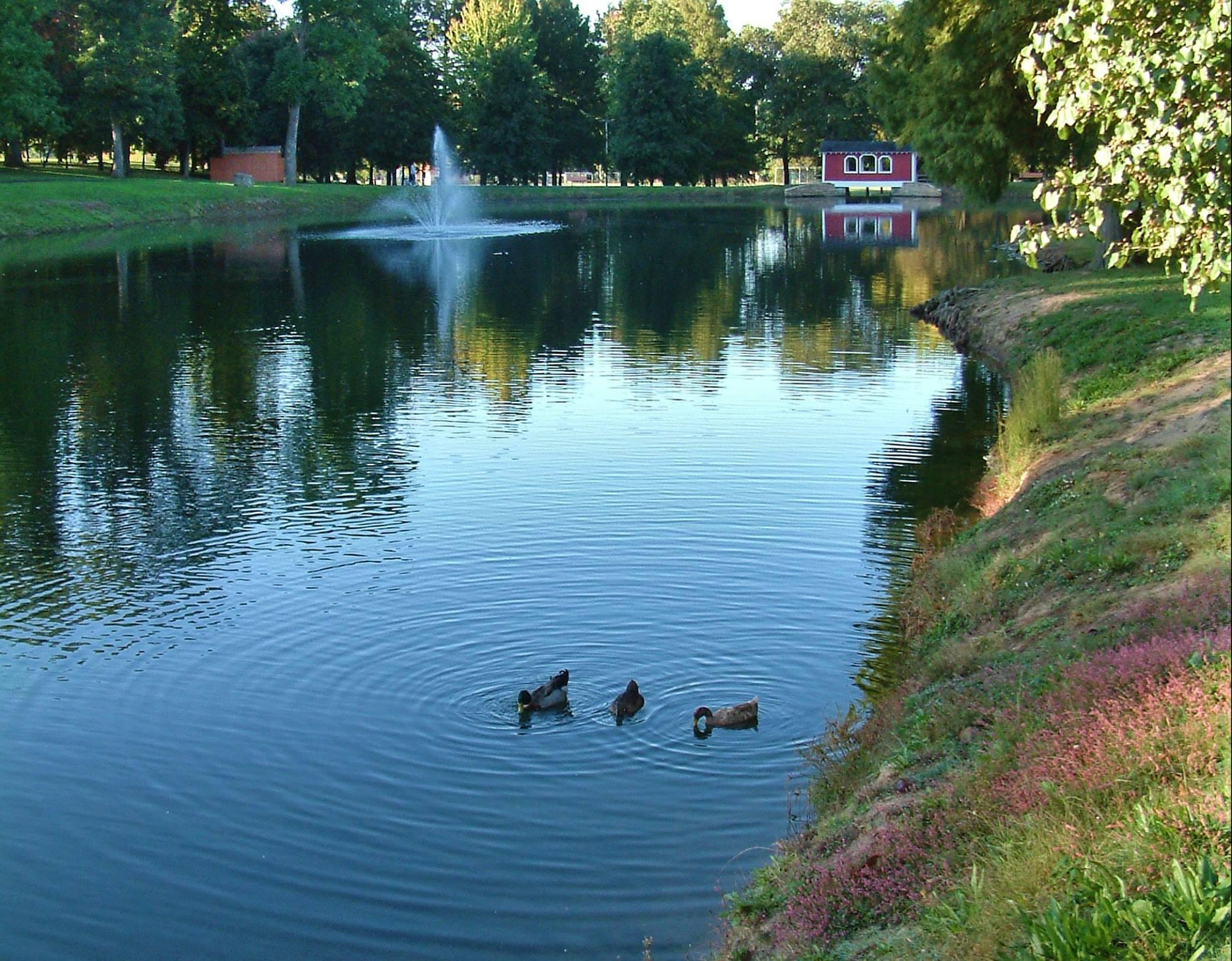 Ducks enjoying the lake at Leo French Park