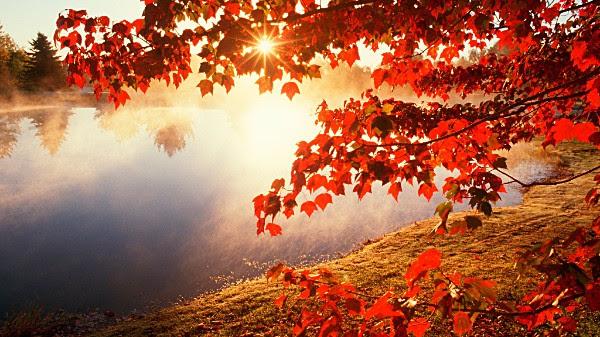 sunlight-fall-leaves