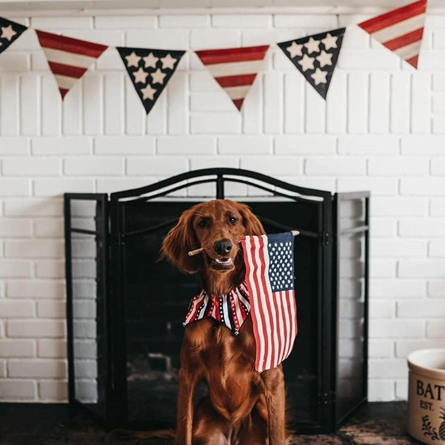 🌱 Happy #4thOfJuly 🇺🇸 from your Friends at The Root! • • Where is the best spot in Colorado to watch fireworks? 🎆🤔❓ • 🌳🔥💨🧠😁 #Freedom #Liberty #IndependenceDay #Medical #RootPups #DogsOfTheRoot #Doggo #ChronicallyThinking #HighStandards #HighSociety #HighClass #Item9 #Cloud9 #ColoradoKindness #CannabisCommunity #ColoradoLocal