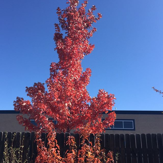 Autumn is gorgeous here in #colorfulcolorado #blueskies  Don't forget to stop in for our NEW Saturday EVENING happy hour 🍃🍂🎃