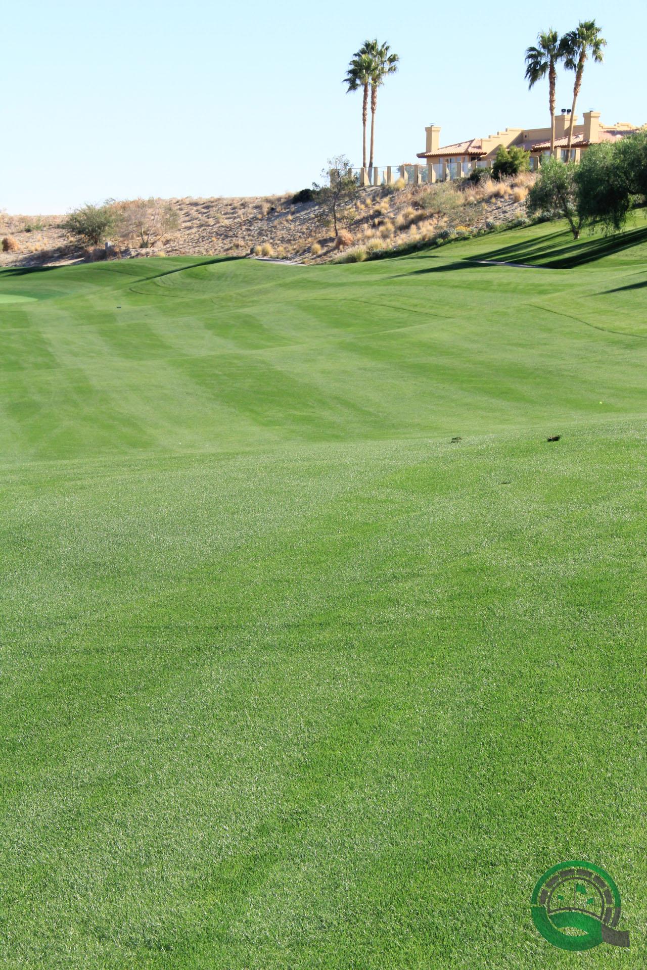 Rams Hill Golf Club Hole 8 Fairway