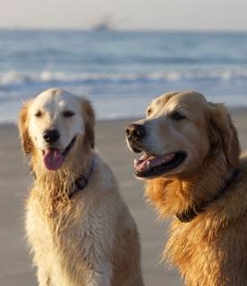 Carson and Cisco on Hilton Head Beach