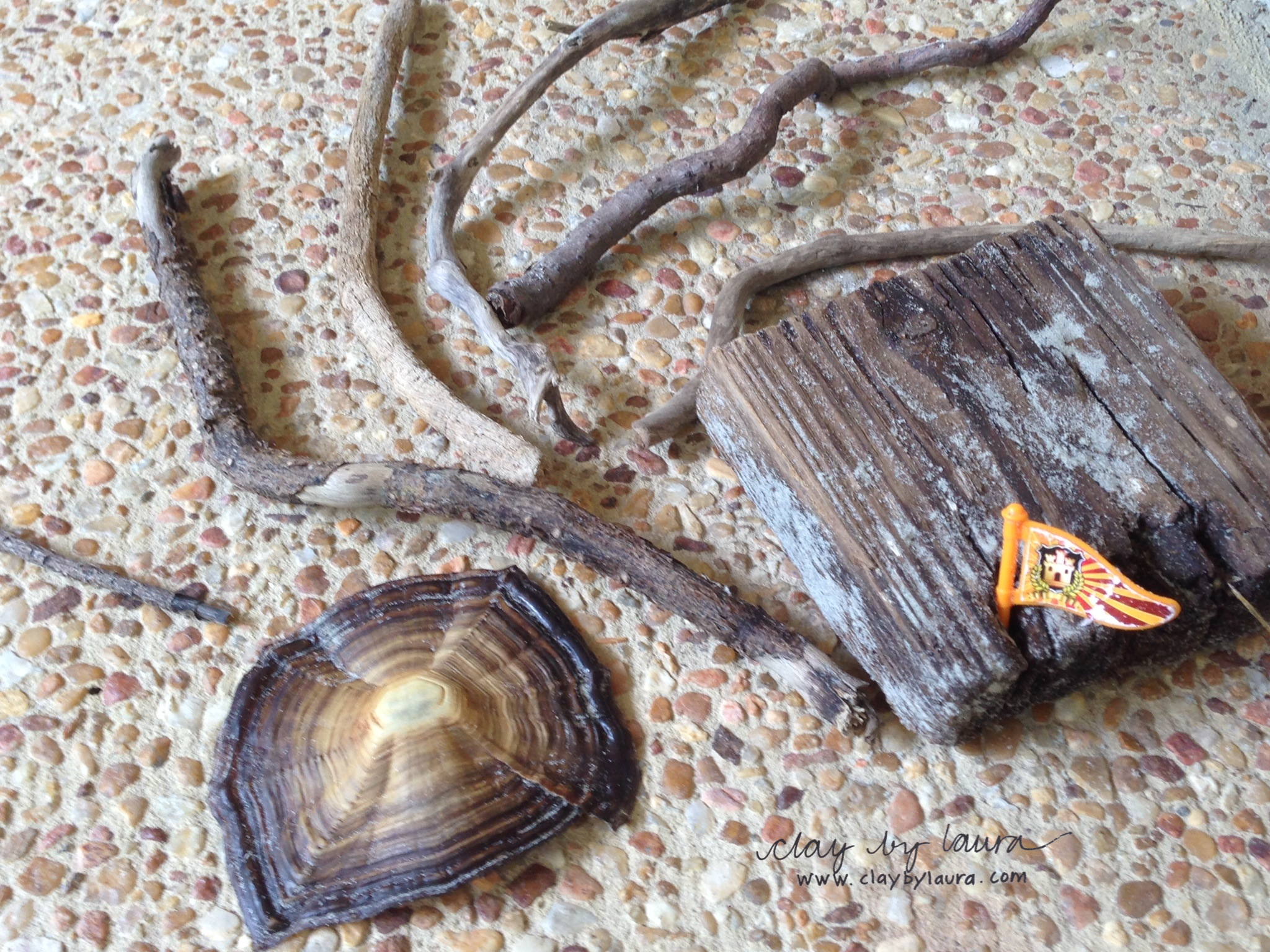 The beach holds many treasures. Here are some items I collected while taking a walk. I will use the driftwood as handles or bases for my work.
