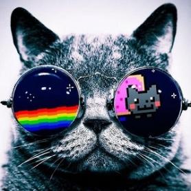nyan-cat-cats-glasses.jpg