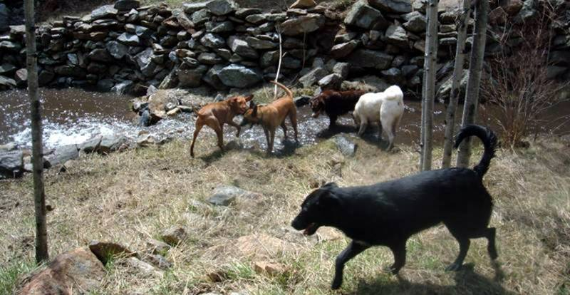Allison's dogs and 3 client dogs - taking a break from training.jpg