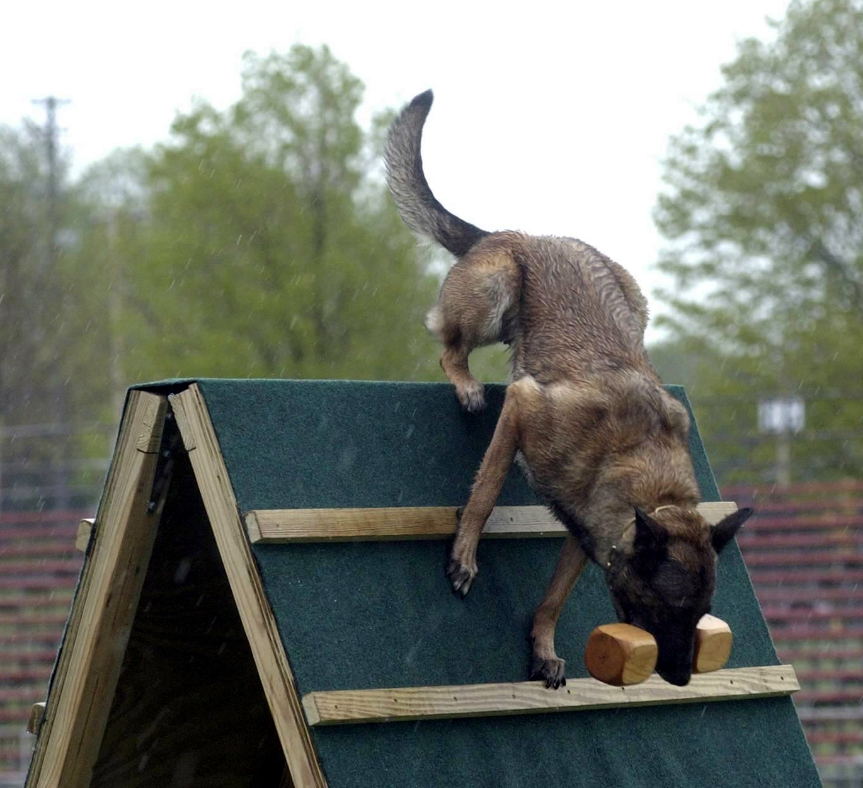 Luna retrieve dumbell over wall 001.jpg
