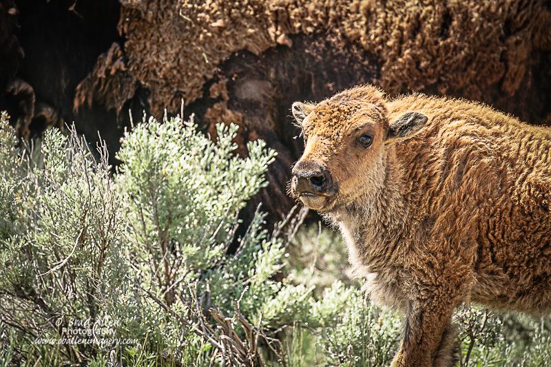 Yellowstone-17.jpg