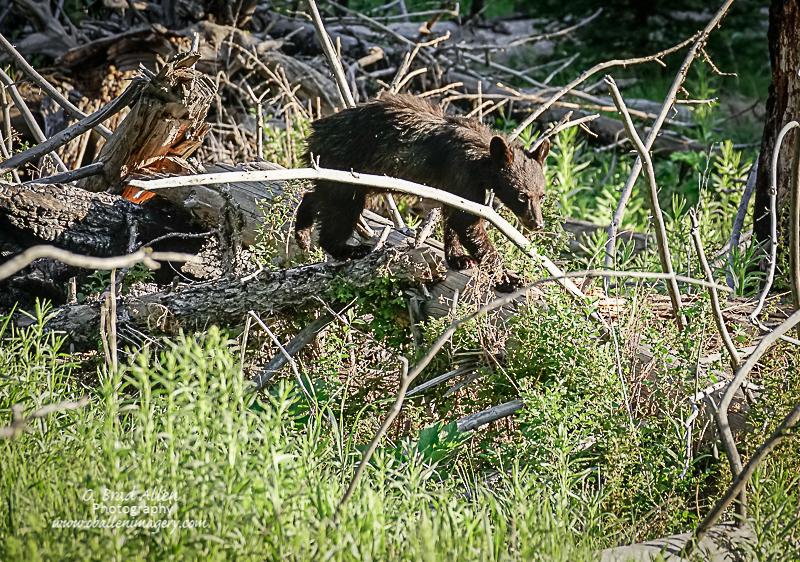 Yellowstone-22.jpg