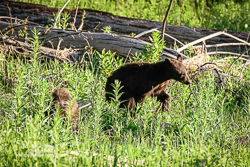 Yellowstone-23.jpg