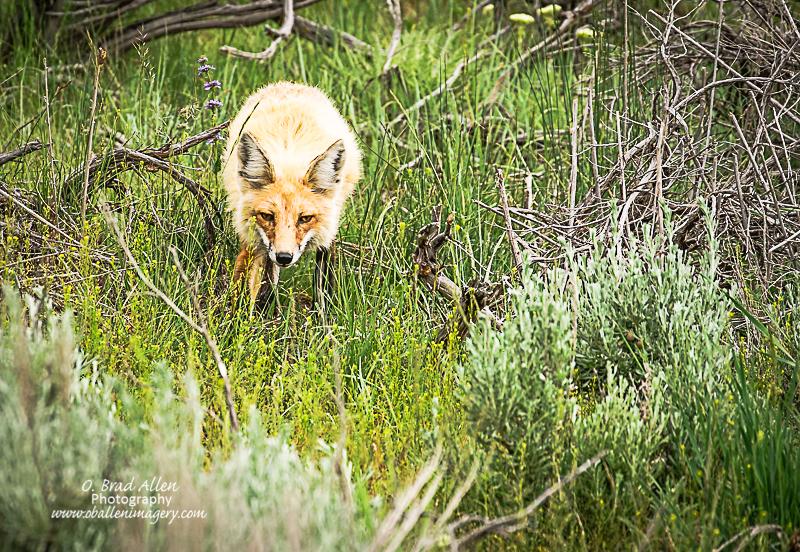 Yellowstone-34.jpg