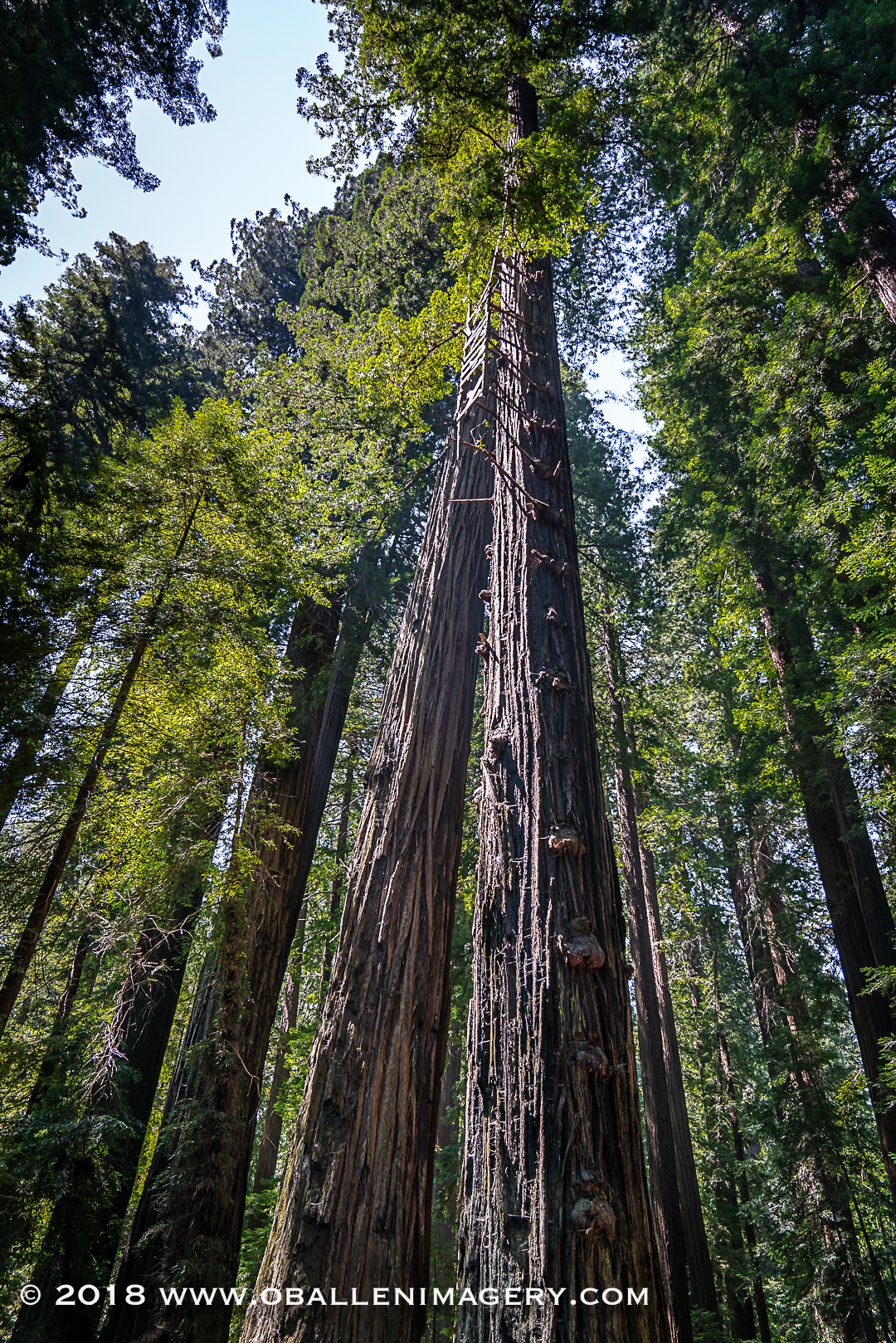 Redwoods-19.jpg