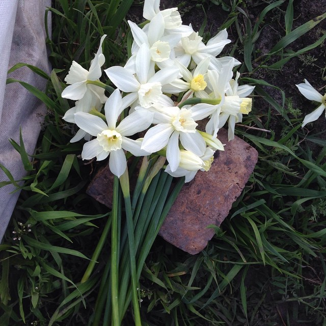 Narcissus #rozmaiflowerfarm #localflowers #kiev #narcissus #beauty #lovemyjob