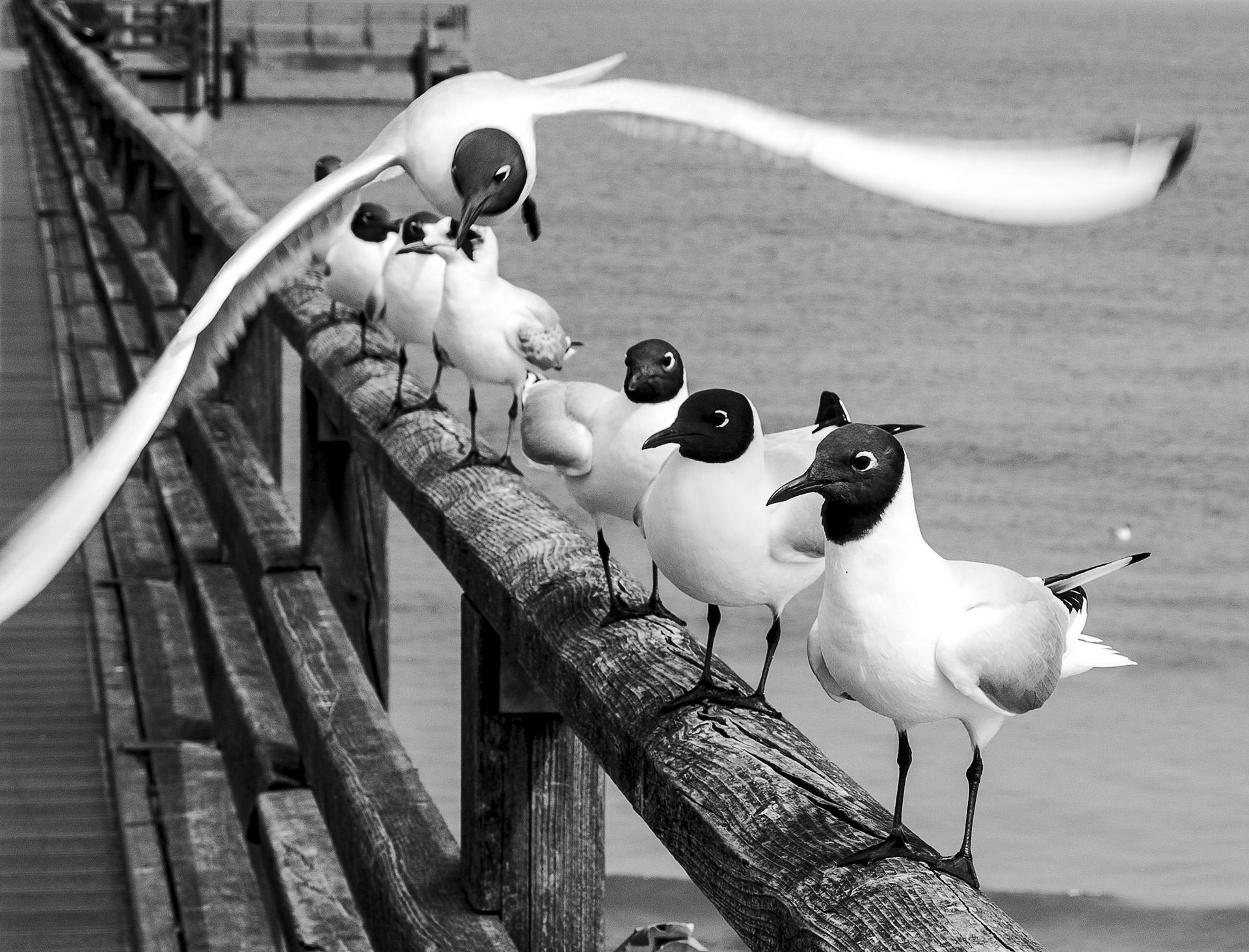 An der Ostsee - Copyright by Eric Berger
