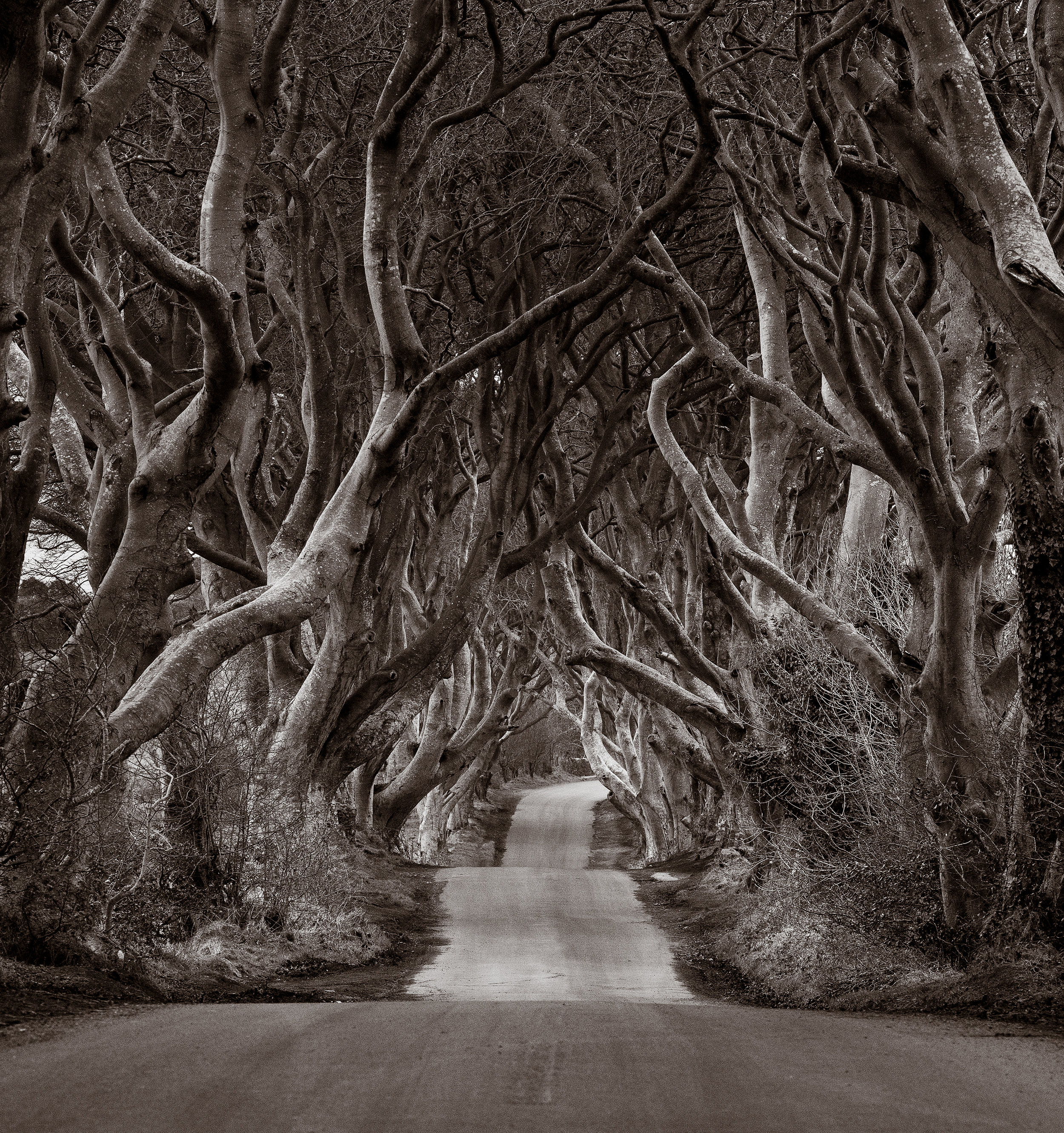 """The Dark Hedges"" by Eric Berger - Leica CL"