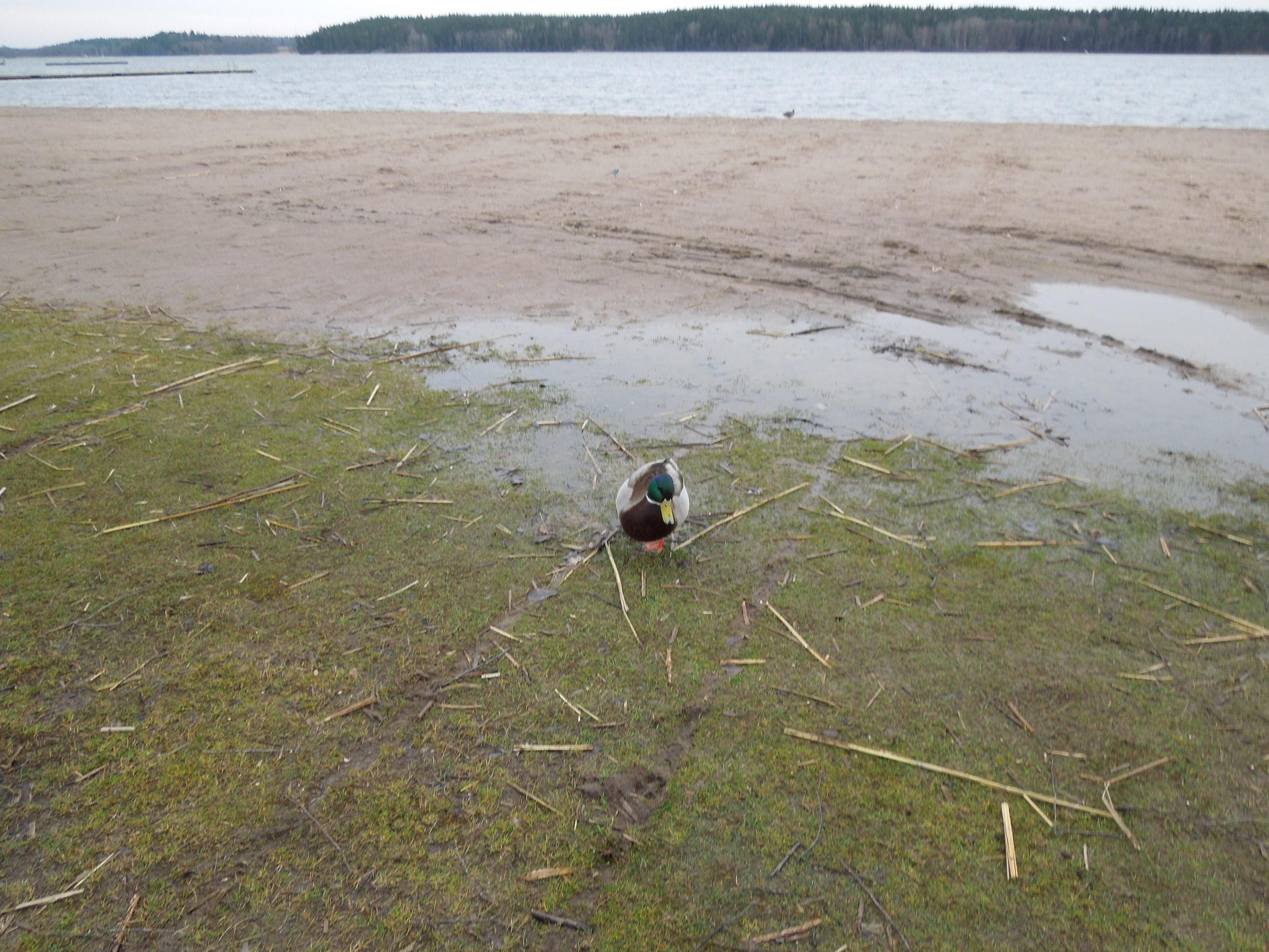 My buddy at the beach
