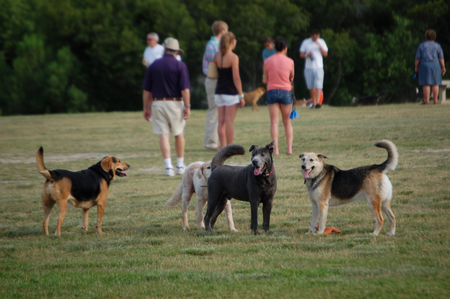 Yappy Hour at James Island County Park. Courtesy of Charleston County Parks.