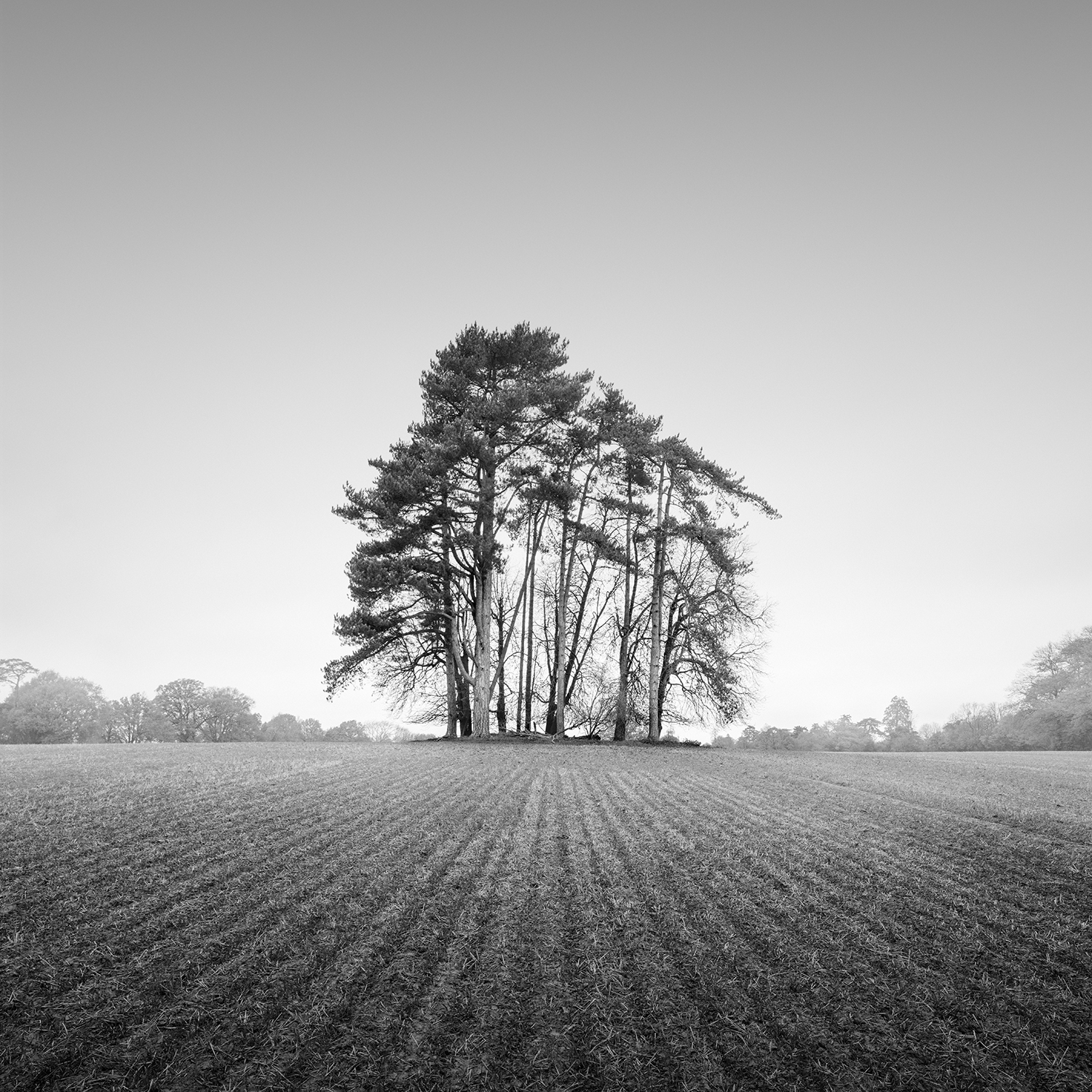 Ensemble - mannings heath, west sussex, 2017    PRINT: £175 | FRAMED: £195