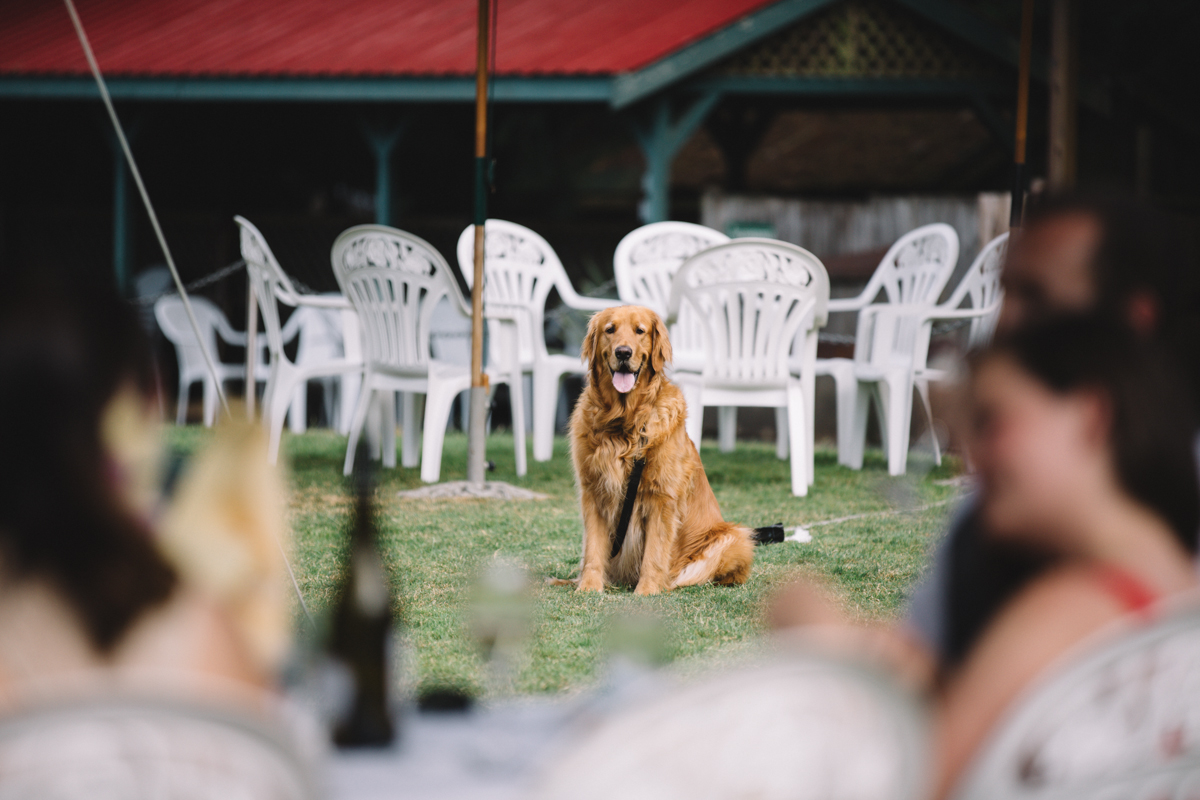 A dog at the wedding reception The Guild King Francis Park Forest wedding ceremony Vancouver Island