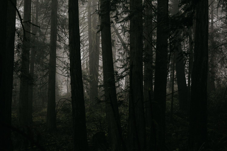 Fog in the forest Galiano Island Wedding
