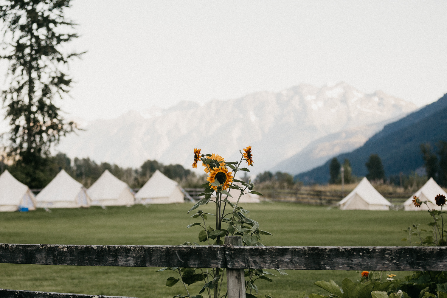 Tipis set up on lawn Pemberton Farm Wedding