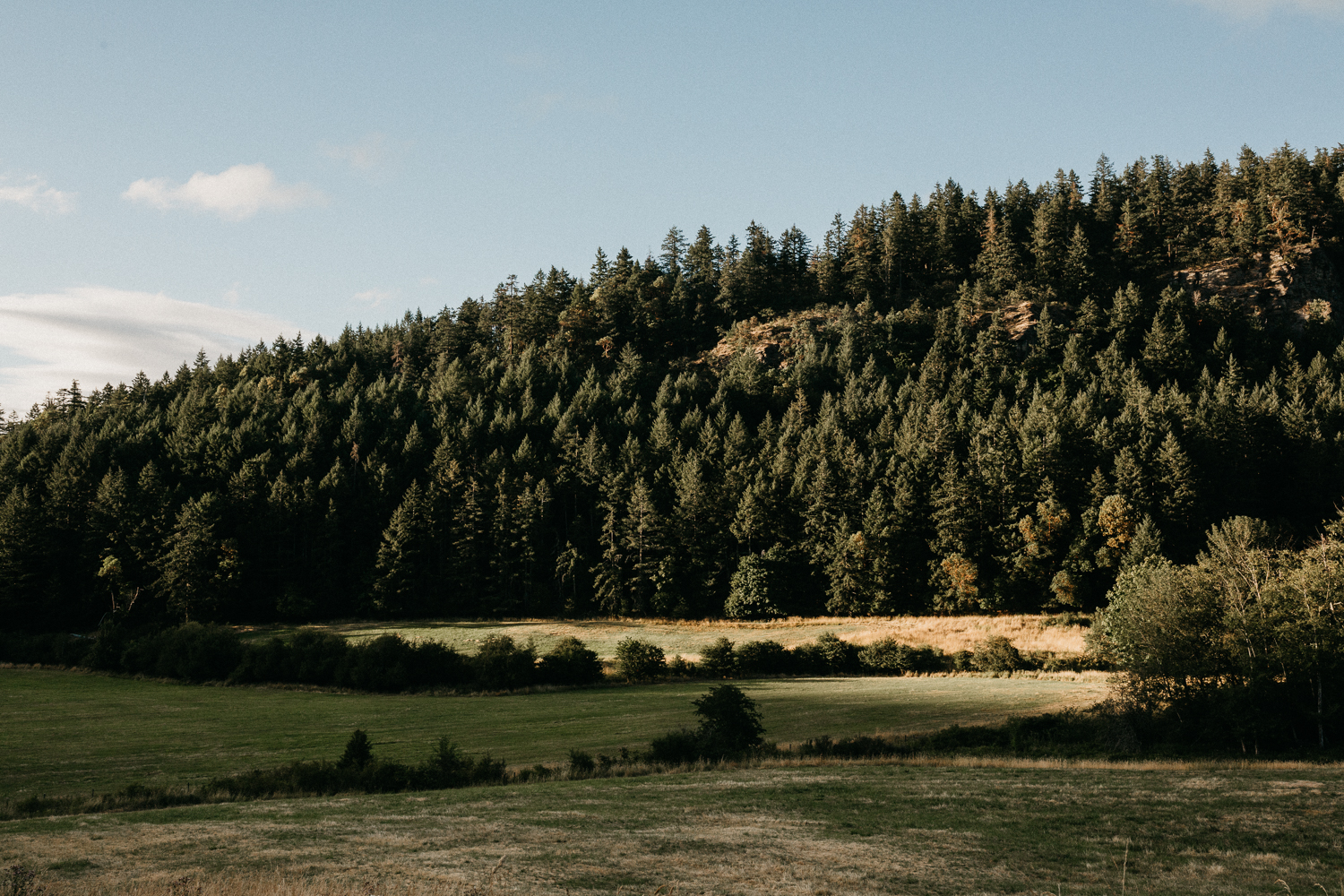 forest at Bird's Eye Cove wedding, Vancouver Island