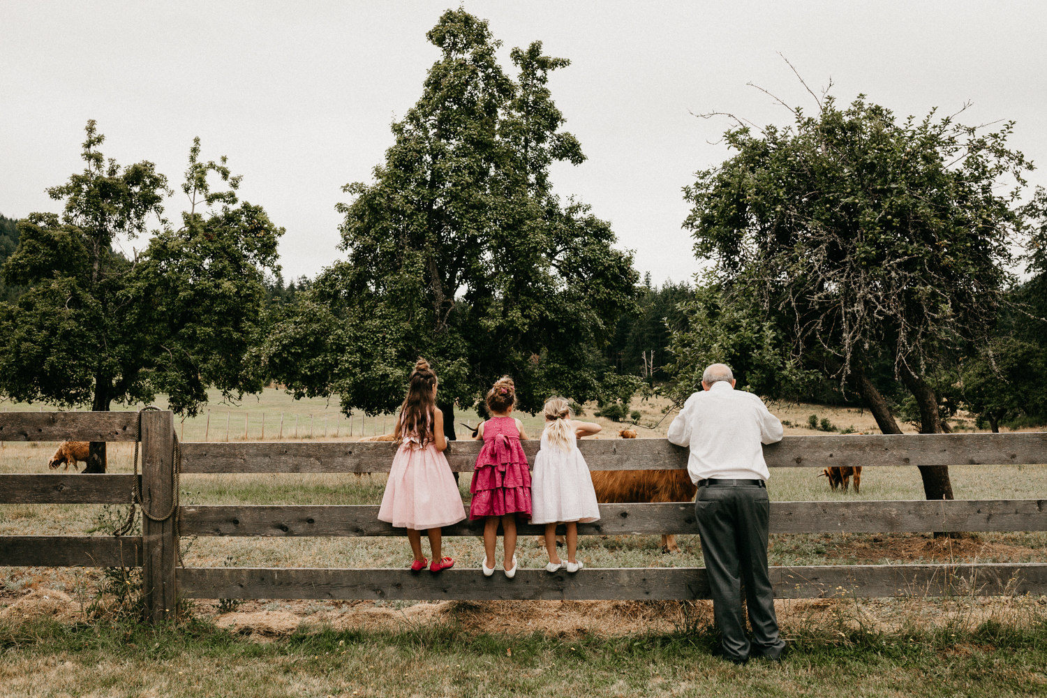 Girls look at the cows at Bird's Eye Cove wedding, Vancouver Island