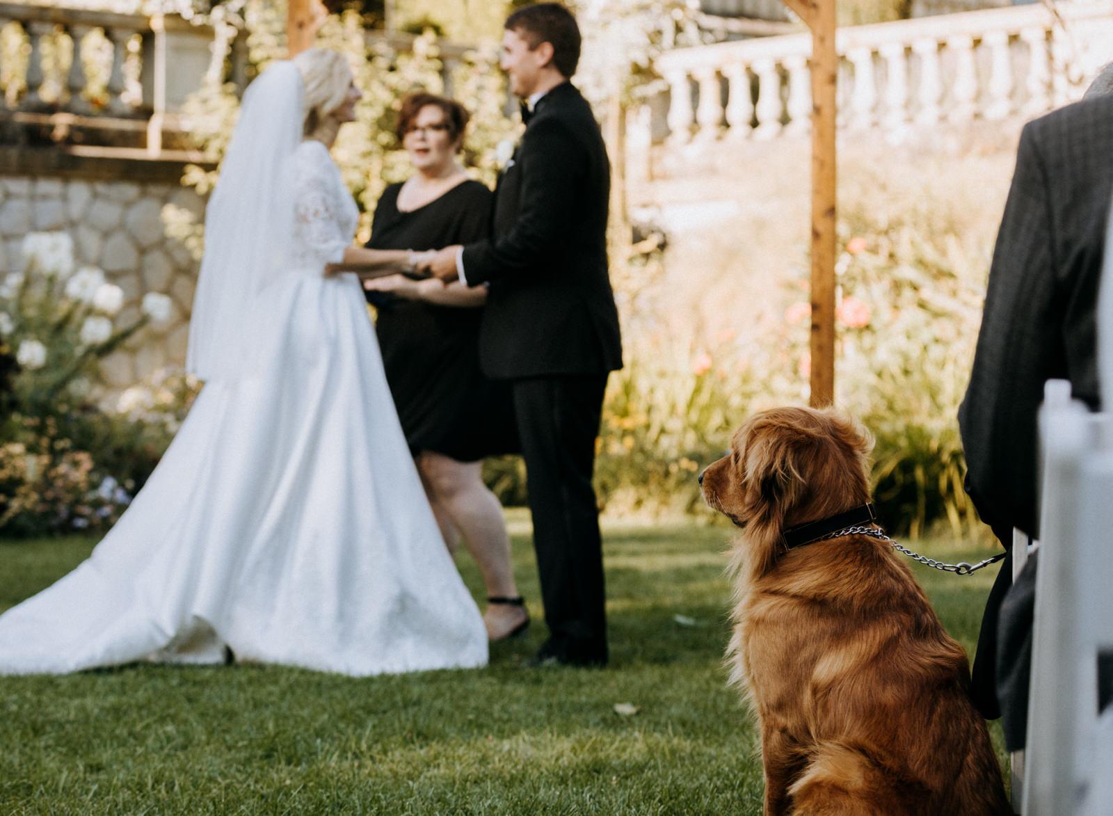 Dog at ceremony Hatley Castle Wedding Photographer