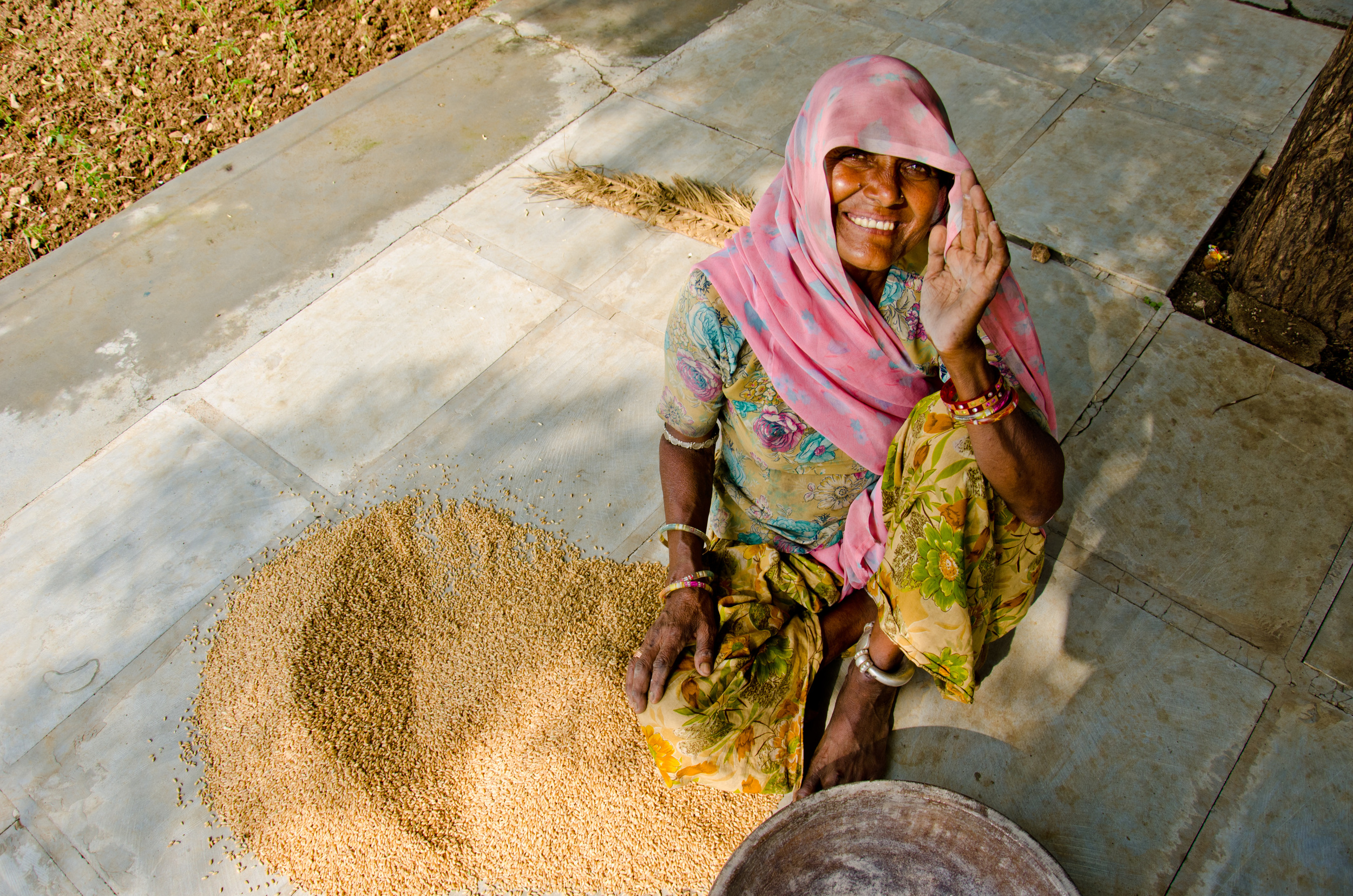 A farmer from Rajasthan with some of her harvestedwheat