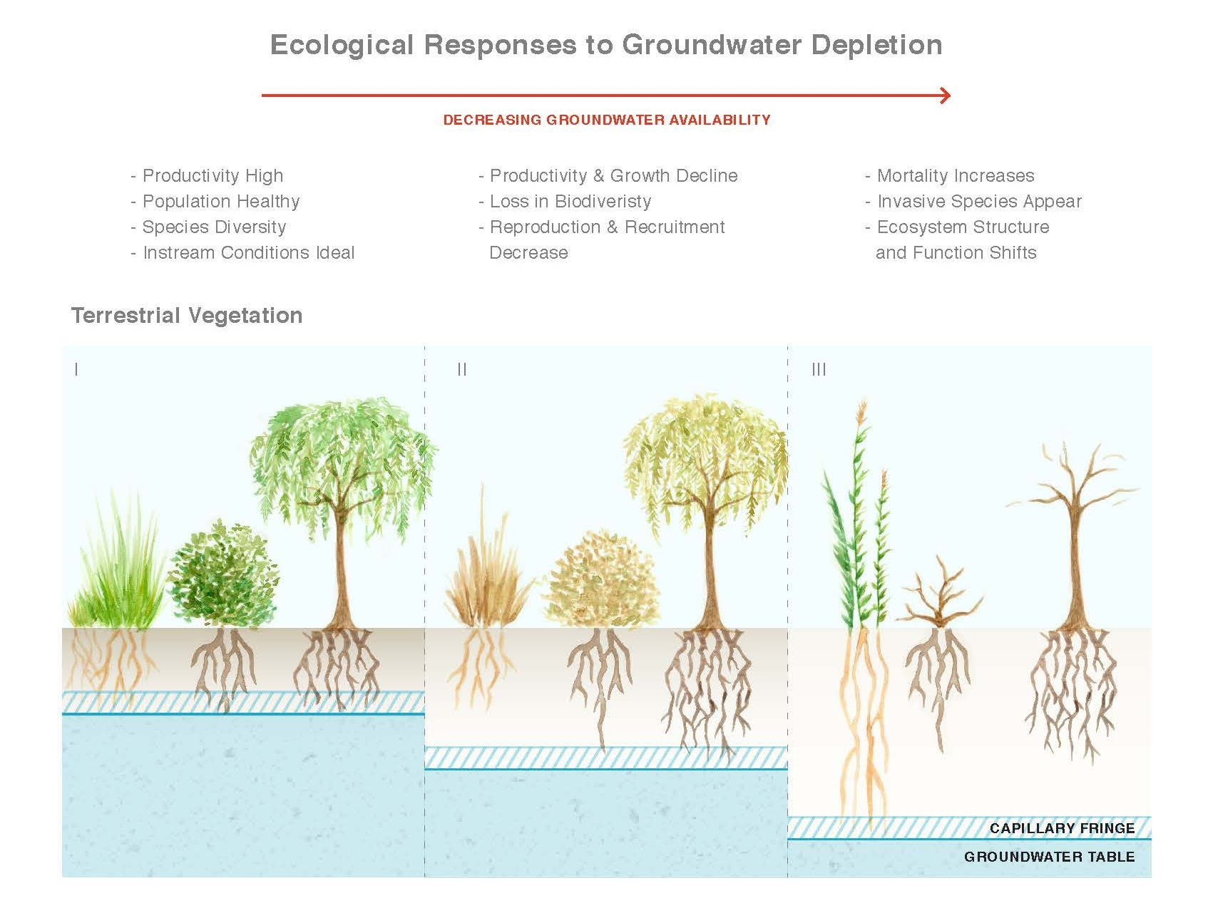 Figure 3. Ecological Responses to Groundwater Depletion [2].