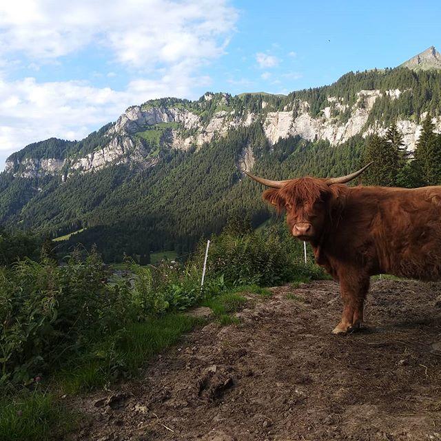 #yesterday #hiking at #hochybrig