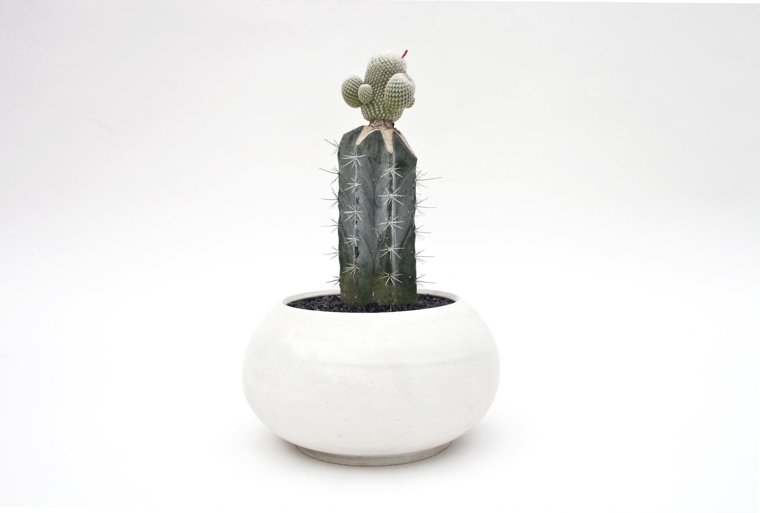 Orbital Planter and Cactus.jpg