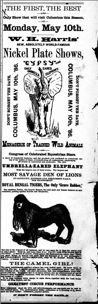 An ad for Ella's circus.