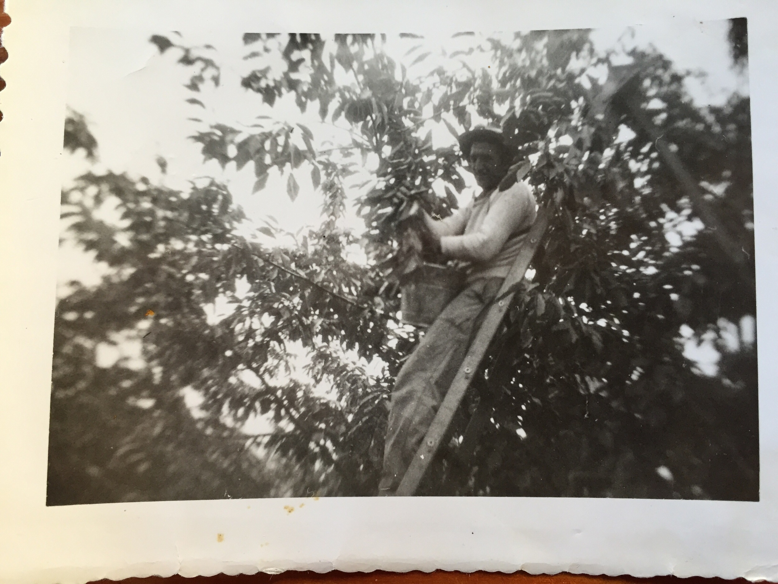 """Grandpa busting it in an orchard. Back of the photo reads """"Another day another $ /Maybe""""."""