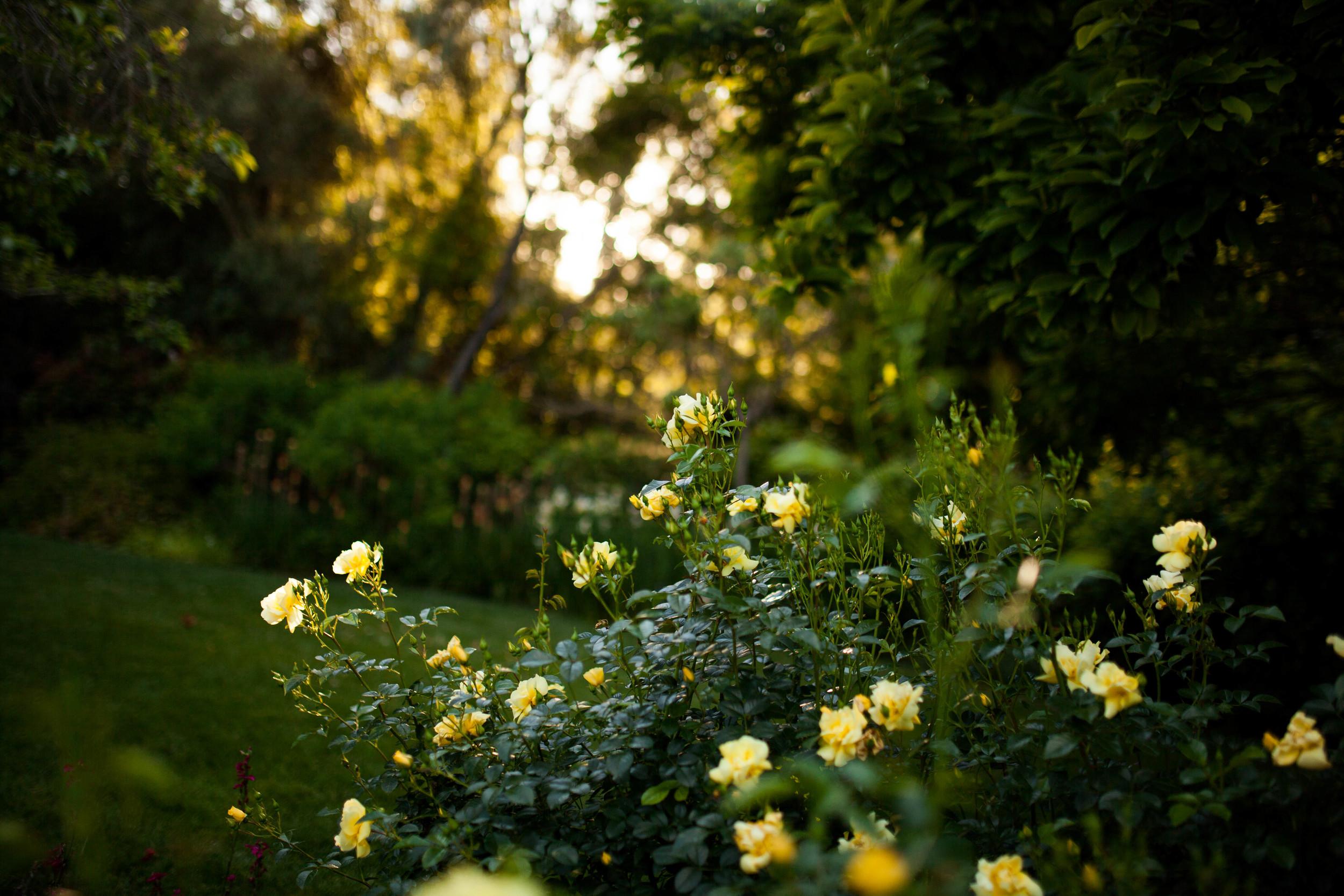 Kelsey & Alex's Garden Wedding -- Whitney Justesen Photography-327.jpg