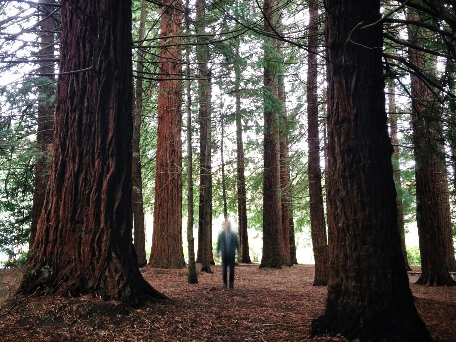smallmotionsforest.JPG