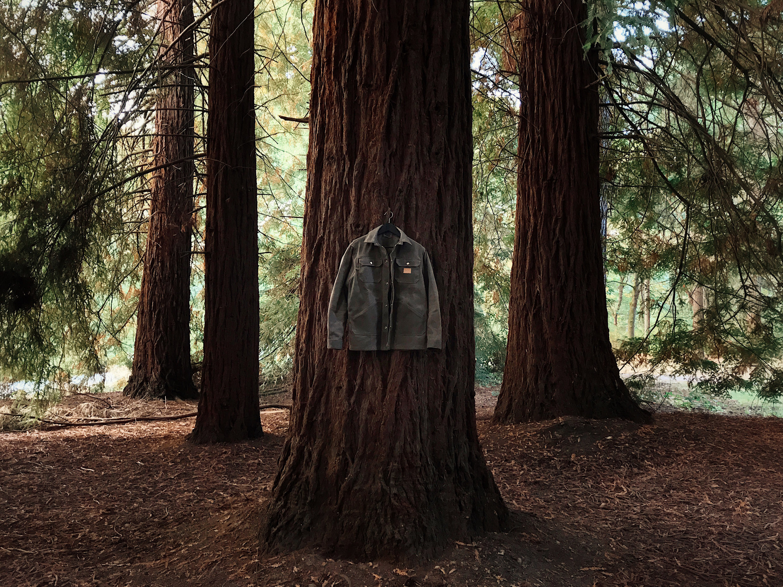 Wills Jacket Tree
