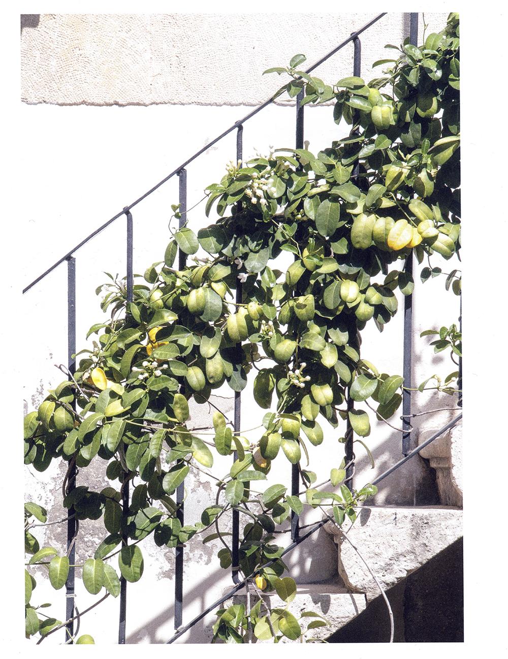 Lodestars Anthology Magazine - Issue 4, Italy © Renae Smith
